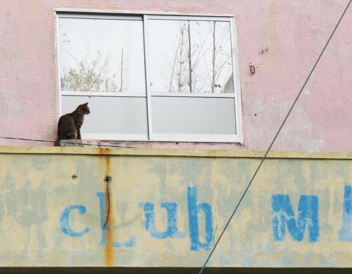 辺野古の猫