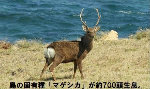 http://hunter-investigate.jp/news/20181016_h01-06.JPG