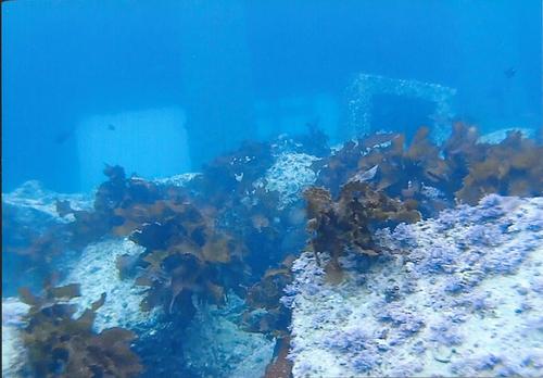 玄海原発 排水口2
