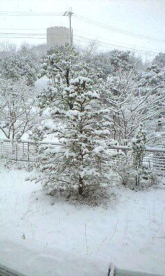 木も真っ白!